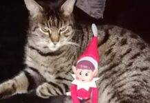 Monty, il gatto survivor
