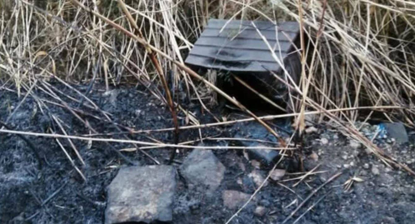 Danno fuoco a una colonia felina, scena agghiacciante: cucce e corpi carbonizzati ovunque