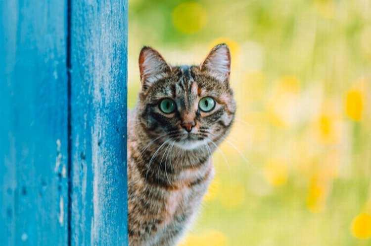 gattini cinderford