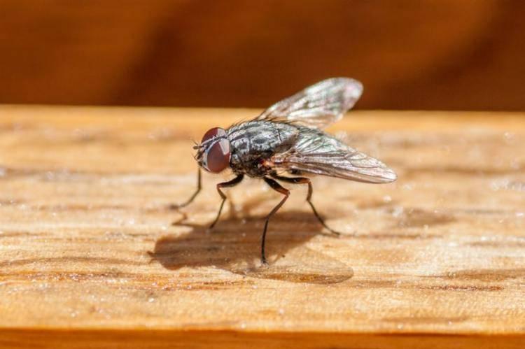 Francia, anziano fa esplodere casa per scacciare una mosca