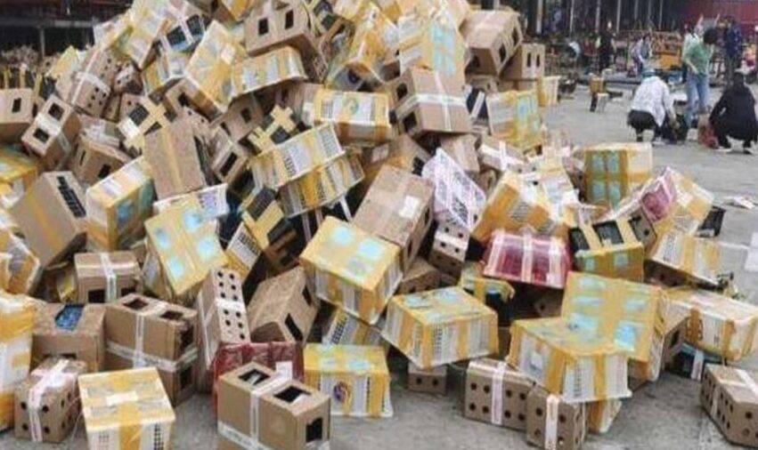 ritrovamento agghiacciante nelle scatole
