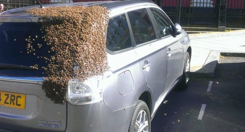 almeno 20mila api