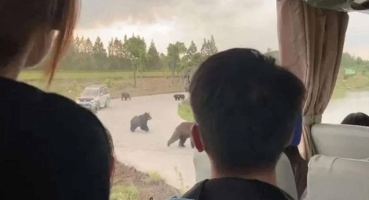 attacco orsi