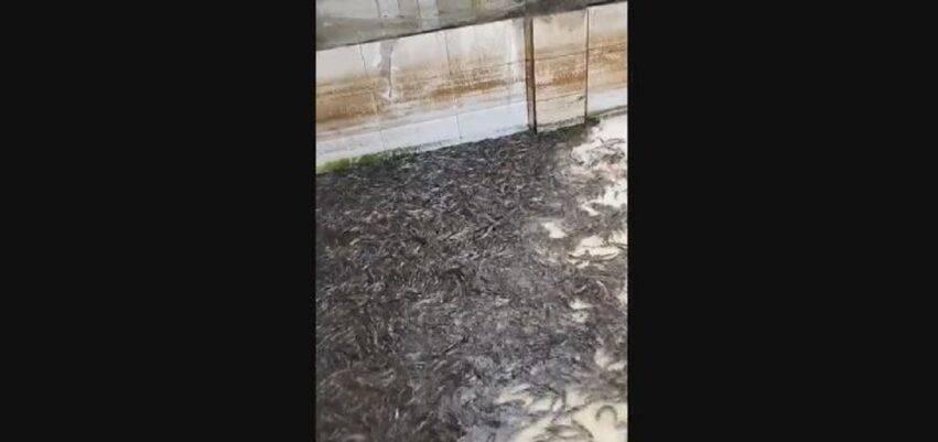 pesci in casa dopo alluvione