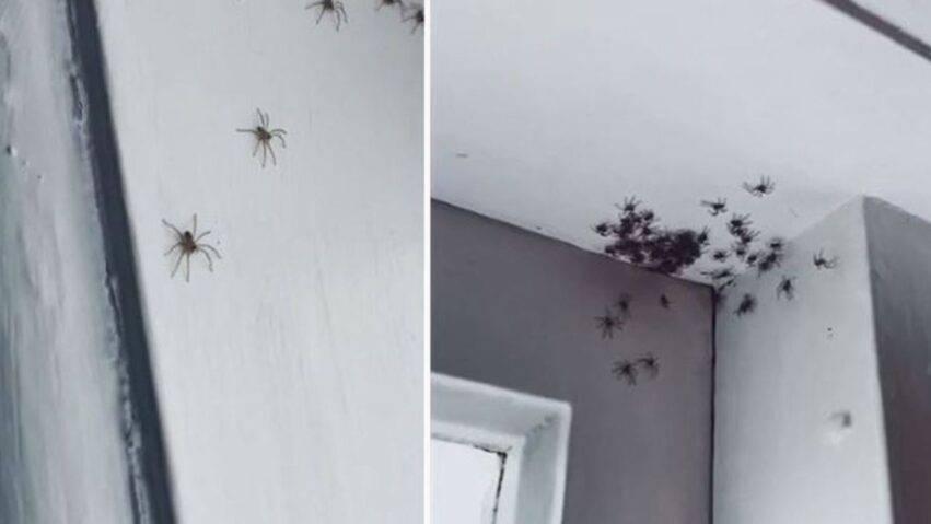 stanza invasa dai ragni