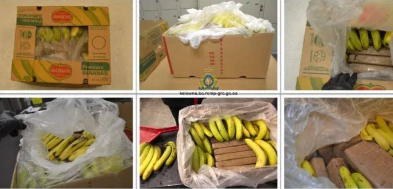 Scoperti 20 Kg di cocaina nascosti nel carico di banane: ma non è finita nel posto giusto