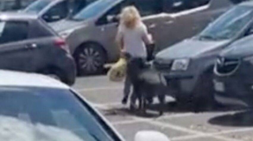 cinghiali assaltano una donna