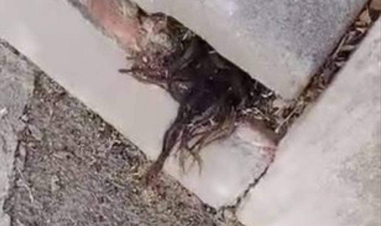 Terrore al cimitero: ciocca di capelli umani spunta da una tomba. Come è potuto succedere?